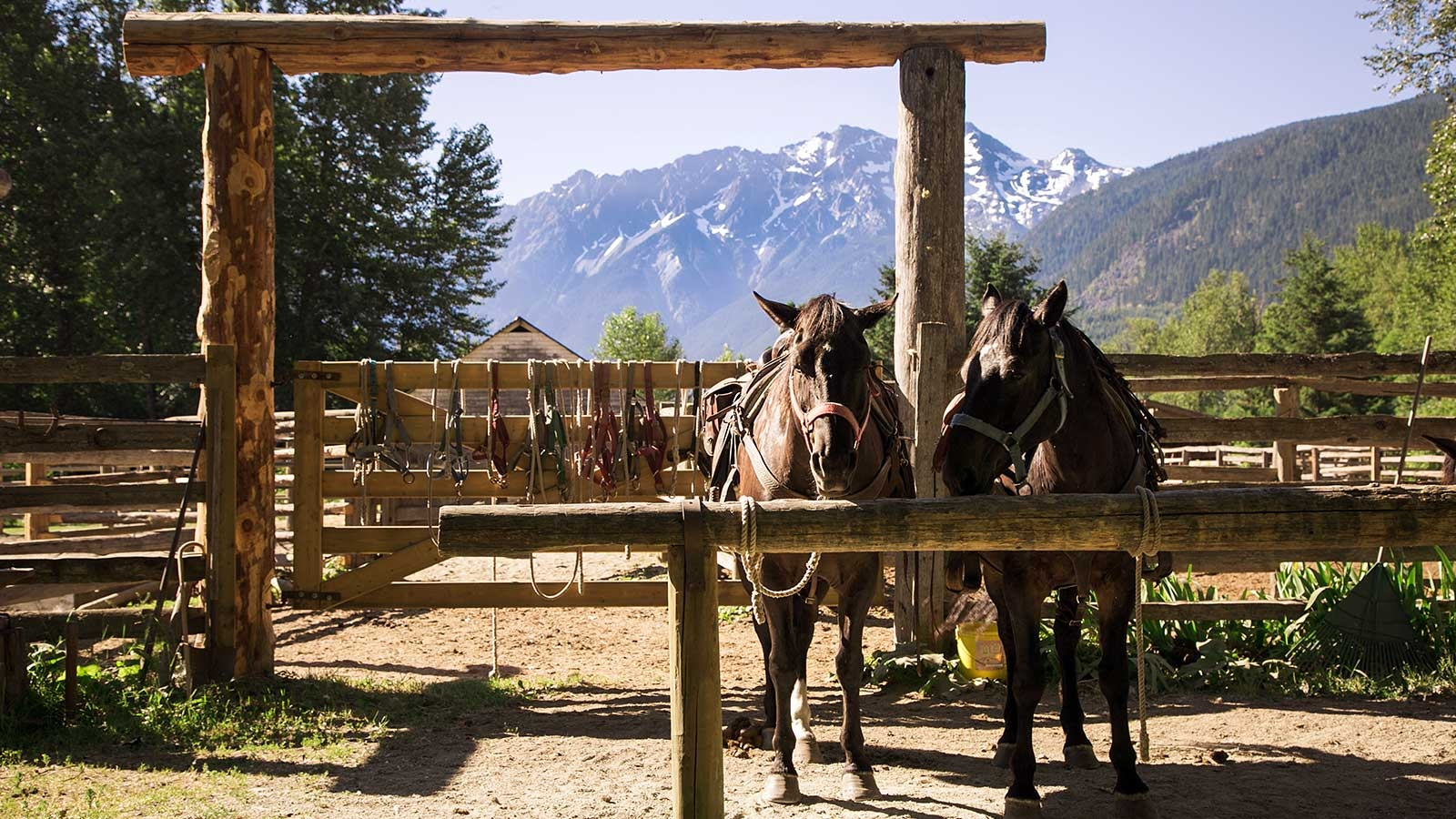 two horses on a ranch near Pemberton, BC standing in front of a sunny mountain scenery in British Columbia
