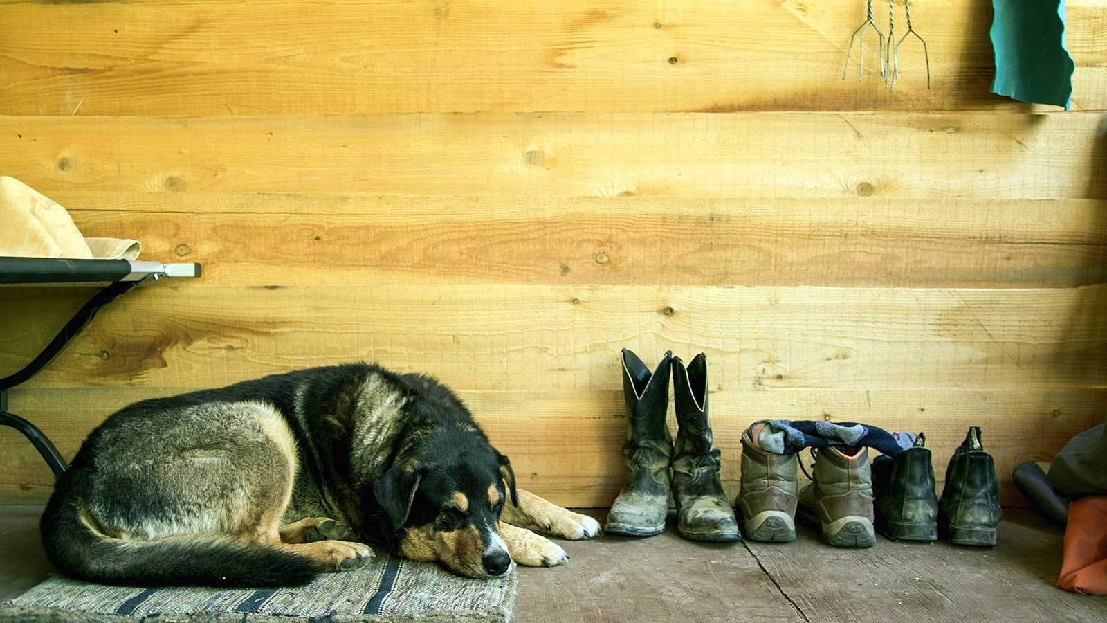 Dog sleeping next to cowboy boots and worn shoes