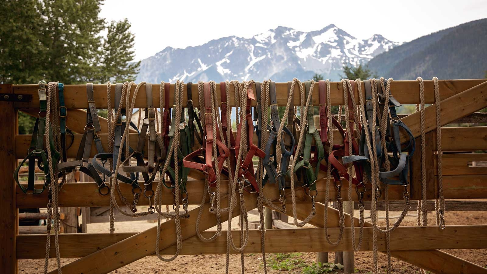 headcollars hanging over a wooden fence with scenic mountains in back