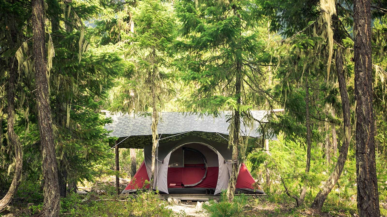 Tent in the middle of a lush green forrest close to Pemberton, BC Canada