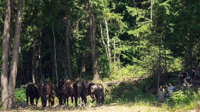 Group of horses and people resting in a lush forrest close to Pemberton on a sunny day