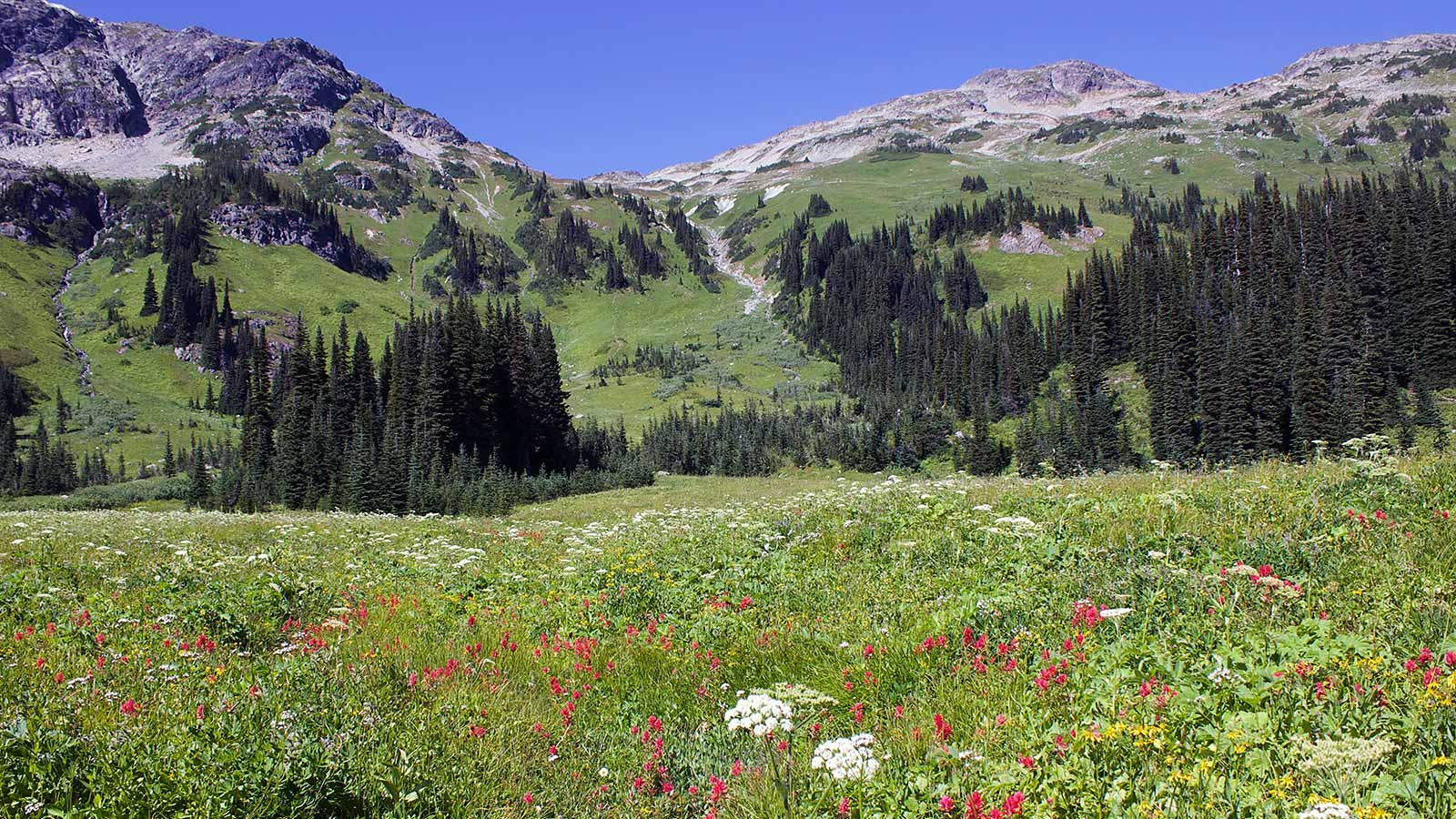 Beautiful mountain landscape with blooming meadow in the front near Pemberton & Whistler