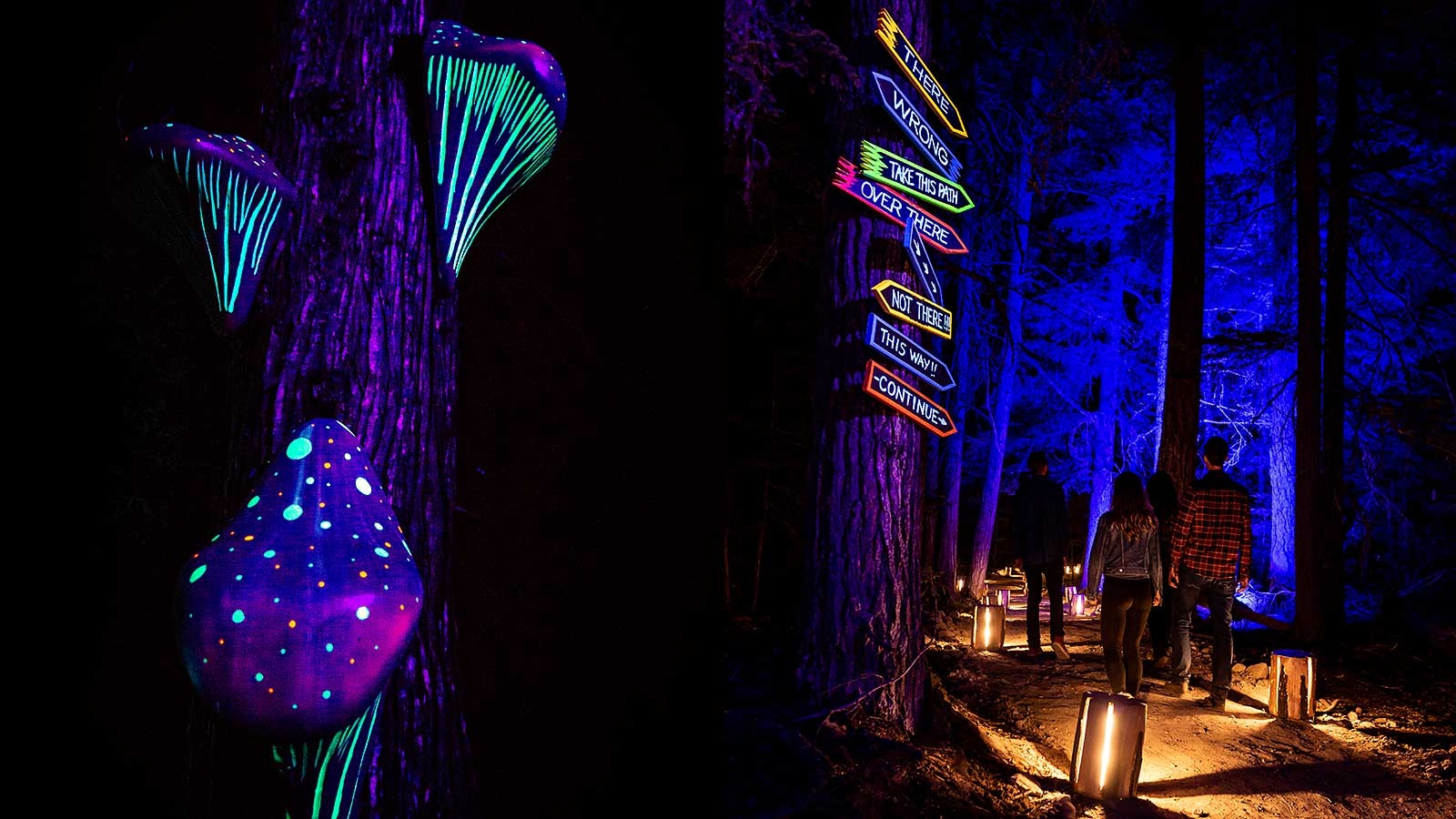 3 people walking through an illuminated Forrest with neon lights & signs