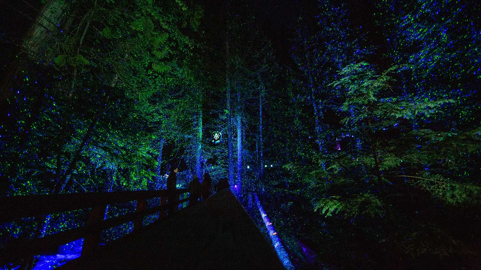 Dark forrest with blue and green illuminations in Whistler
