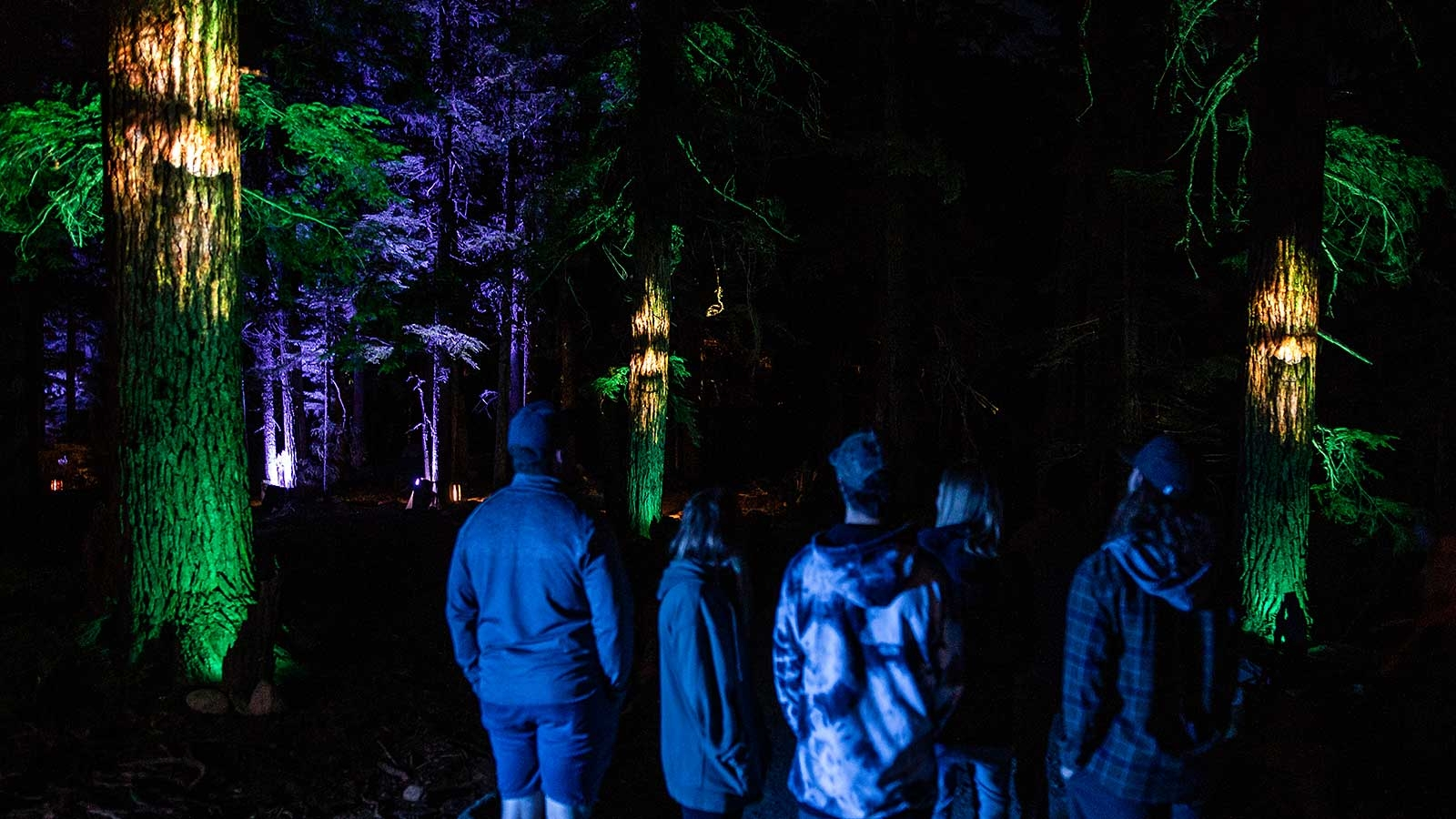 Five people standing in a dark forrest with green and purple illumination